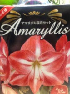 アマリリス栽培セット